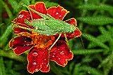 LHJOY 1000 Piezas Puzzle Insecto Saltamontes Sentado en Flor Animal Regalo de cumpleaños 75x50cm