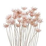 YUNGLI 30 flores secas naturales decorativas pequeñas margaritas pequeñas estrellas ramo de flores para preservar la decoración del hogar (rosa claro)