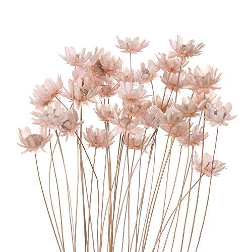 Dekorative getrocknete Blumen, Mini-Gänseblümchen, kleine Sterne, Blumenstrauß, natürliche Pflanzen, für Hochzeit, Heimdekoration, 30 Stück hellrosa