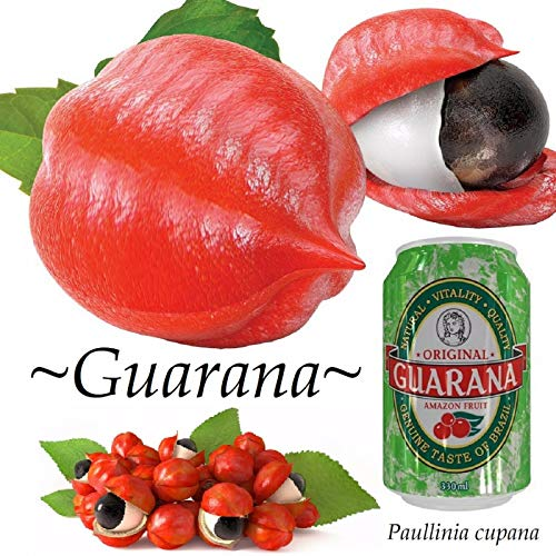 FERRY Bio-Saatgut Nicht nur Pflanzen: ~ Guarana Paullinia cupana Organic Superfood smlted