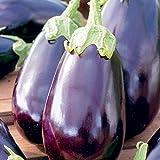 25 Graines d'Aubergine Black Beauty - légume jardin potager - méthode BIO