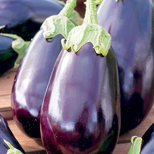 25 Graines dAubergine Black Beauty - légume jardin potager - méthode BIO