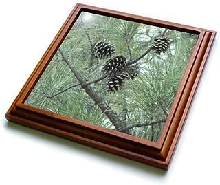 3dRose trv_23812_1 Pine Cones Trivet with Ceramic Tile, 8 by 8