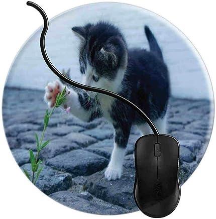 """Résultat de recherche d'images pour """"chats animés en informatique"""""""