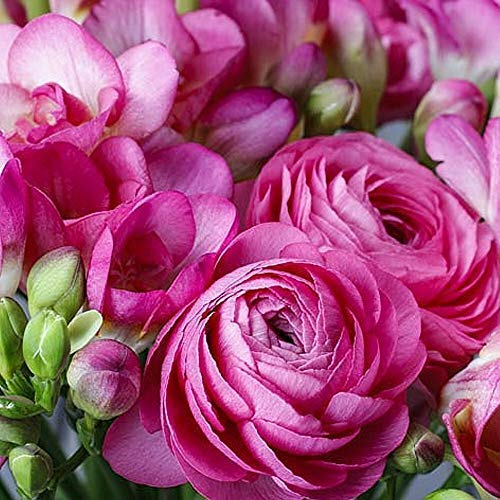Linoows Serviettes 20 Pièce, Renoncules Et Fresien, Printemps Bouquet de Fleurs 33x33 CM