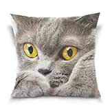 KJDFH Kissenbezug,Cute British Shorthair Cat Decorative Square Throw Pillow Case Cushion Cover for...