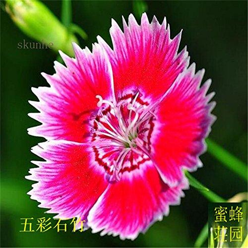 Graines colorés petits exclus brodé bambou pour Bebaizhen Dix types de 100 graines américaines (wu cai shi) 1 zhu