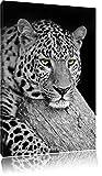 Dark ruhender Leopard schwarz/weiß Format: 80x60auf
