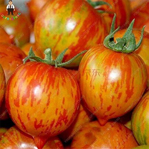 100pcs Violet Tomates cerises Fruits semences balcon et légumes Bonsai Seed Facile à cultiver jardin Plantes en pot jaune clair