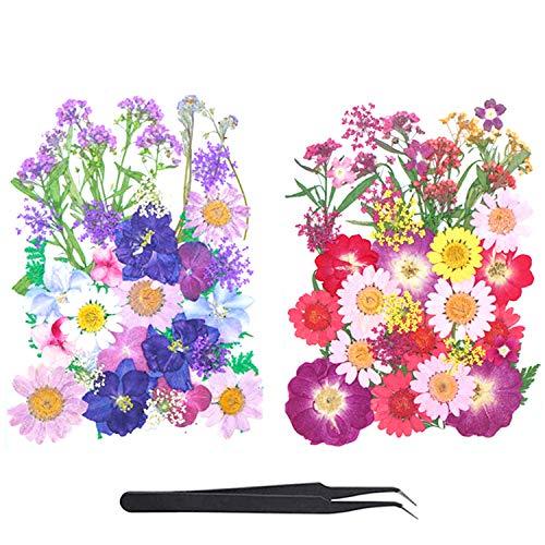 Flores Secas Manualidades Resina flores secas  Marca LABOTA