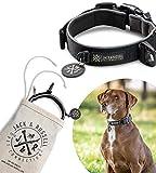 Jack & Russell Collar de Perro Balu - Premium Collar de Perro Estable DIV. tamaños y Colores (Circunferencia del Cuello M (35-43 cm), Negro)