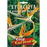 Semi - Sterlizia (Strelitzia reginae Aiton)