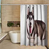 """Alaskan Malamute Shower stall Curtains Funny Adorable Siberian Dog Blue Eyes Furry Domestic Canine Image Water Repellent and Mild Resistant 72""""x72"""",Brown Cream White"""