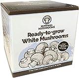 Merryhill Mushrooms - Grow Your Own Fresh White Lidded Gift Mushroom Kit (Single White Mushroom Kit)