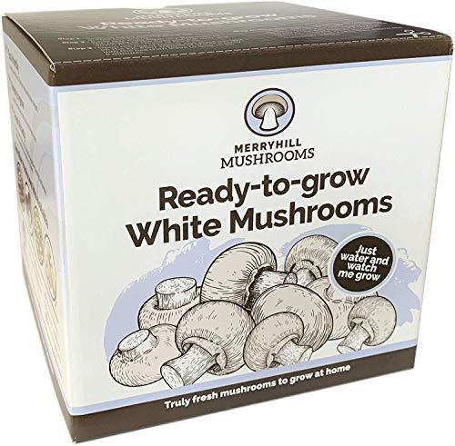 Merryhill Mushrooms - Grow Your Own Fresh White Mushroom Growing Kit (Single White Mushroom Kit)