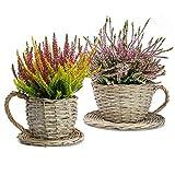 Maison & White Juego de 2 maceteros de taza de té Willow   Macetas De La Taza Y Del Platillo   Contenedores de flores herméticos   Regalo perfecto