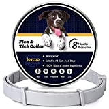 Joycoo Flea and Tick collar for dogs 8-Month Protection Flea and Tick Control