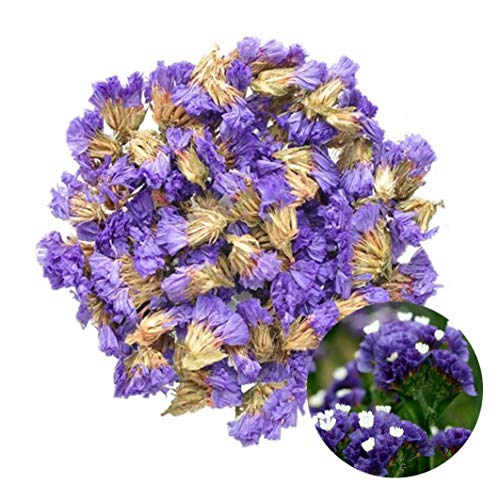TooGet Flower Petals and Buds Forget-me-not Bulk Flower to Make Sachets, Potpourris, Flowers DIY, Candle Making, Wedding Decoration, Perfect for All Kinds of Flowers Crafts - 2 OZ