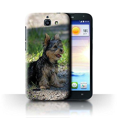Hülle Für Huawei Ascend G730 H&/Eckzahn Rassen Yorkshire Terrier/Yorkie Design Transparent Ultra Dünn Klar Hart Schutz Handyhülle Case