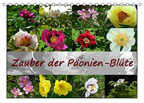 Zauber der Päonien-Blüte (Tischkalender 2022 DIN A5 quer)