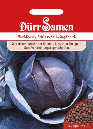 Dürr Samen 1841 Rotkohl Marner Lagerrot (Rotkohlsamen)