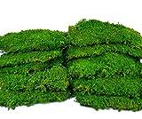 10 Lagen Premium Flachmoos konserviert, DIY Moosbilder selber kleben selbst machenMoosplatten Vorteilspack ausgesuchtes, echtes haltbares Moos für die Dekoration kaufen Prime Moss Deko