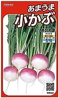 サカタのタネ 実咲野菜5403 あまうま小かぶ あやめ雪 00925403