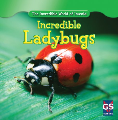 Incredible Ladybugs (The Incredible World of Insects)