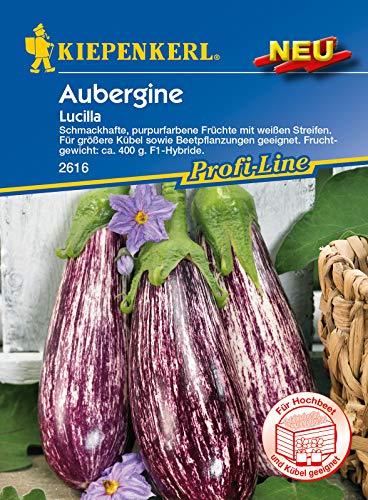 Aubergine Lucilla F1, schmackhafte purpurfarbene Früchte mit weißen Streifen, für Freiland oder Gewächshaus