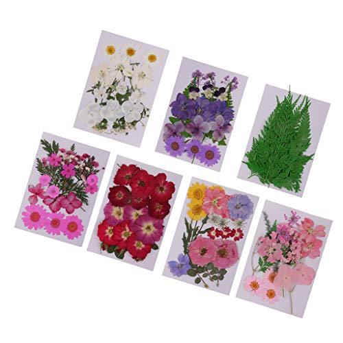 7 Paquetes/Bolsas De Tamaño Surtido De Colores Lotes Mixtos Naturales Reales Flores Prensadas Hojas Prensadas Flores Para DIY Scrapbooking Artes Art