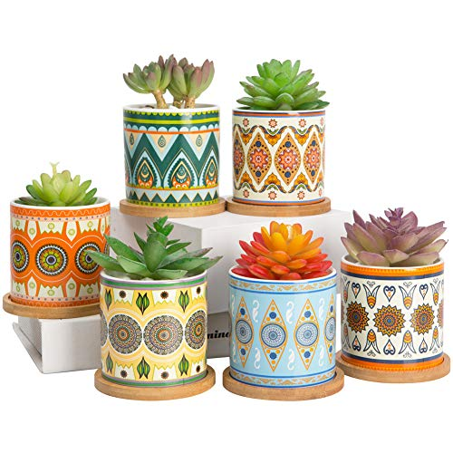 Succulent Plant Pots - 3.5 inch Ceramic Succulent Planter - Small Cylinder Flower Pots for Cactus with Drainage Hole and Bamboo Tray, 6 Pack.