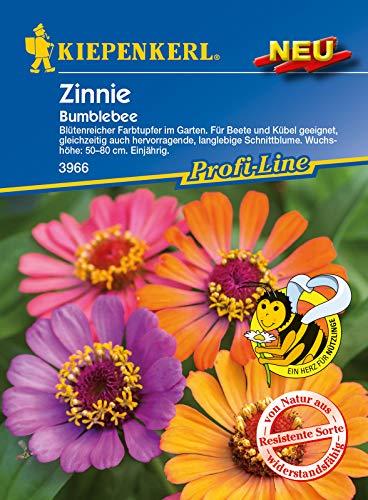 Zinnie Bumblebee, blütenreicher Farbtuper im Garten, für Beete und Kübel, Ideale Schnittblume und Nektarspender