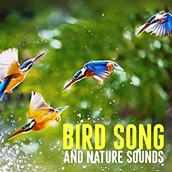 Bird Song and Nature Sounds