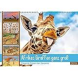 Afrikas Giraffen ganz gross: Elegante Riesen der Savanne (Wandkalender 2019 DIN A3 quer): Giraffen, die afrikanischen Tiere mit Weitblick (Monatskalender, 14 Seiten )