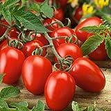Vajra seeds Roma Tomato Seeds American Roma Tomato F1 Hybrid Vegetable 30 Seeds Packet