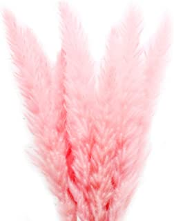 Color Life 25-30 Pcs Dried Pampas Grass,Phragmites Communis,Wedding Flower Bunch, for Home Decor,24