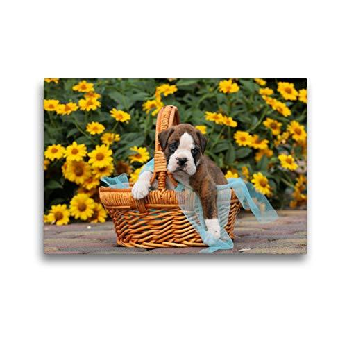 Premium Textil-Leinwand 45 x 30 cm Quer-Format Ein Korb voll Glück - Boxerbaby | Wandbild, HD-Bild auf Keilrahmen, Fertigbild auf hochwertigem Vlies, Leinwanddruck von Kerstin Mielke