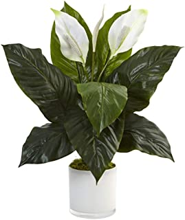 Best artificial peace lily Reviews