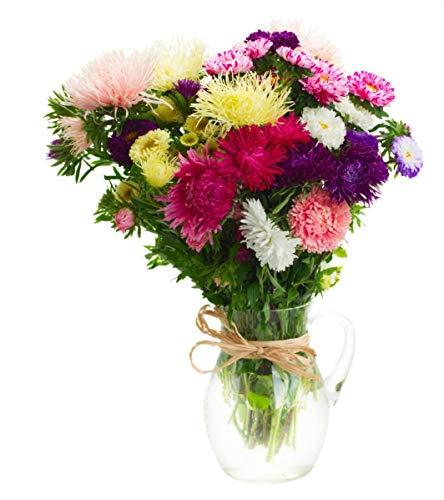 Asters - mélange de variétés pour fleurs coupées - 500 graines