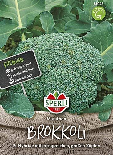 81043 Sperli Premium Brokkoli Samen Marathon | Aromatisch Zart | Ertragreich | Große Köpfe | Brokkoli Saatgut