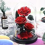 ZEYUE Fleur Éternelle,Rose Éternelle sous Cloche,Rose Dôme en Verre,Trois Roses,Cadeau Saint Valentin,Mariage,Anniversaire,Cadeau d'anniversaire,Cadeau Fête des Mères