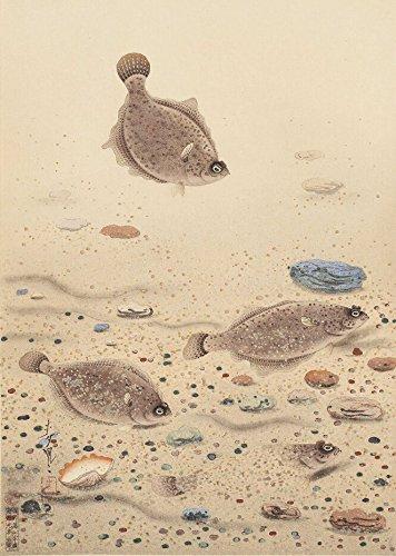 Japanese Art Print - Halibut by Ono Bakufu (13