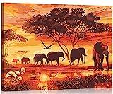 WONZOM Pintura por Números Kits 16 * 20 Pulgadas Pintar por Numeros para Adultos Niños DIY Pintura al óleo sobre Lienzo Elefante Animales con Marco de Madera