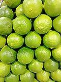 Kejora Fresh Seedless Persian Limes - 5 lb