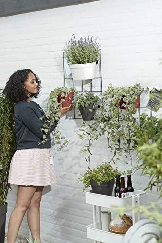 Elho Loft Urban Green Wall Plantenpot Duo Bloempot, zwart