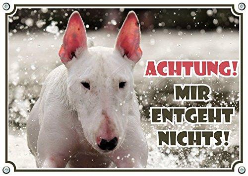 Petsigns Hundeschild weißer Bullterrier - Achtung! Schild Warnschild aus Metall, 1. DIN A5