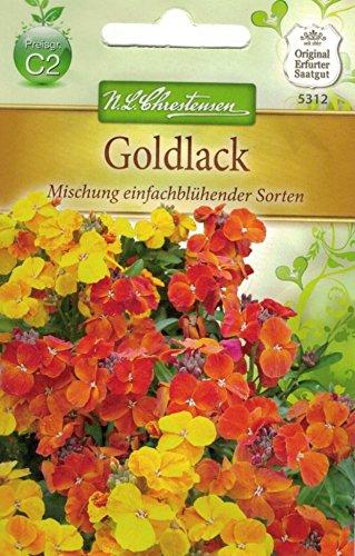 Chrestensen Goldlack 'Mischung einfachblühender Sorten'