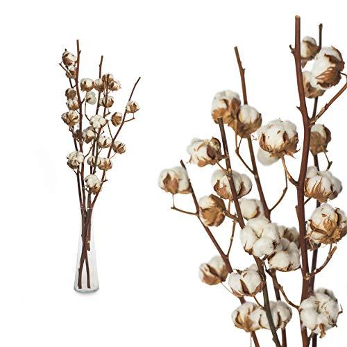 5 Zweige echte Baumwolle - 55 bis 60cm - 5 bis 7 Blüten pro Baumwollzweig - echte Pflanze getrocknet sehr lange haltbar - prima Dekoration mit Stil Deko DIY basteln Floristik