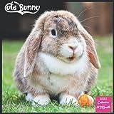 Cute Bunny 2022 Calendar: Official Rabbit Calendar 2022, 16 Month Square Calendar