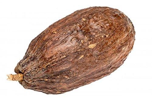 NaDeco Kakao Schote geöffnet ohne Bohnen Kakaoschote Kakaofrucht Kakaobohne getrocknete Kakao Frucht ohne Kakaobohnen